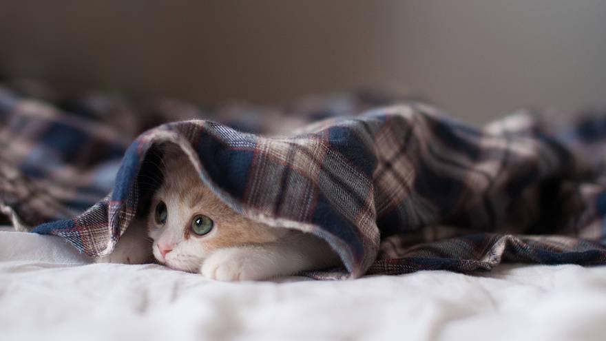 Чтобы в квартире было тепло